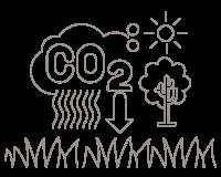 13.250 hectáreas de Praderas Permanentes que ayudan a capturar CO2.