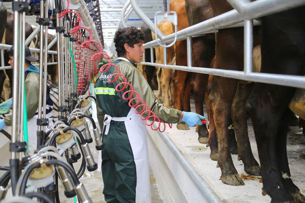 Trabajando en lecherías